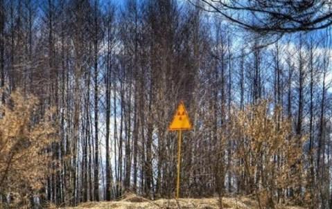 Bosque rojo en Chernóbil