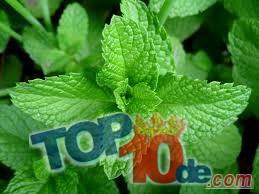 Los 10 mejores remedios caseros para las ojeras
