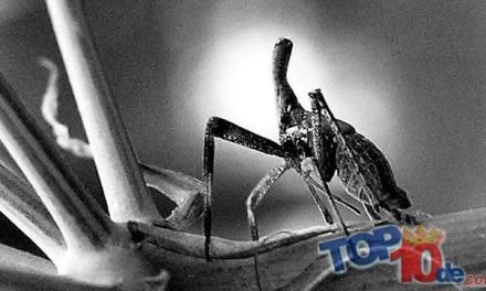 Los 10 insectos más raros del mundo