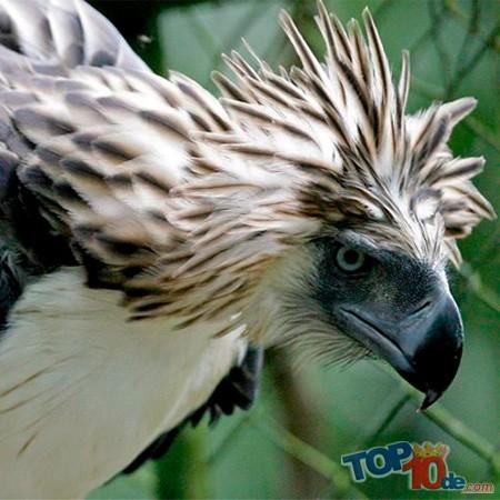 Las 10 Aves más raras del mundo