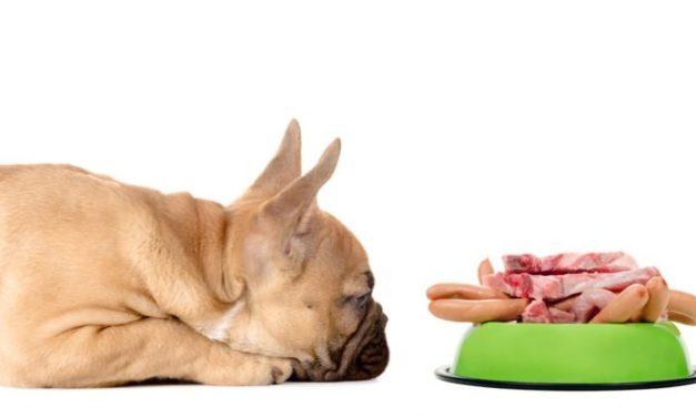 10 alimentos que no deben comer las mascotas en las fechas de Acción de Gracias y Navidad