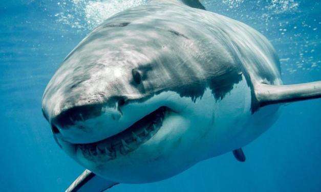 Top 10 animales más peligrosos