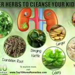 top 10 super herbs to cleanse your kidneys top 10 home remediesa healthy diet, exercise and staying hydrated are essential for supporting your kidneys for a little extra help, you can include some herbs in your diet