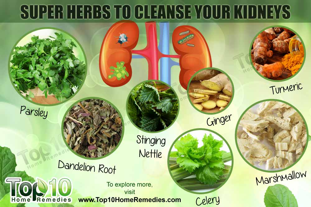 Image result for CLEAN YOUR KIDNEY