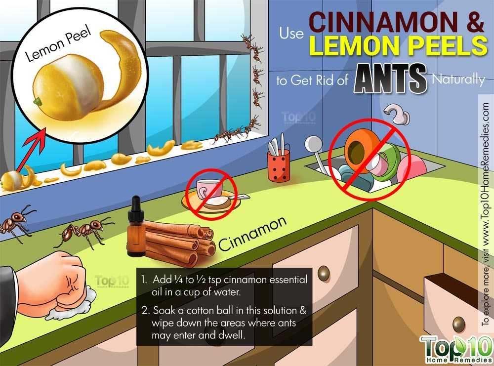 How To Get Rid Of Ants In The House 7