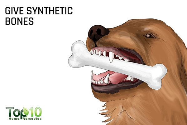 give synthetic bones to maintain dog's healthy teeth