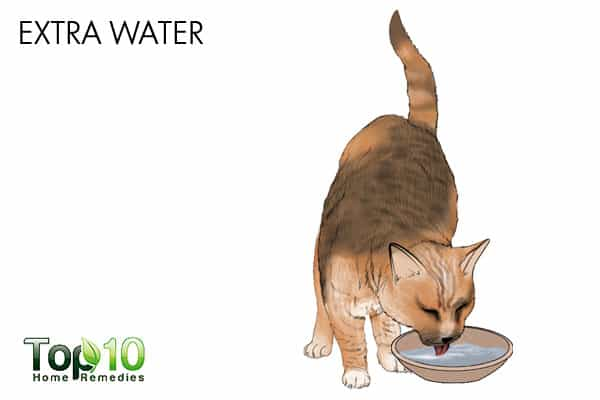 Extra water for urinary tract infection in cats