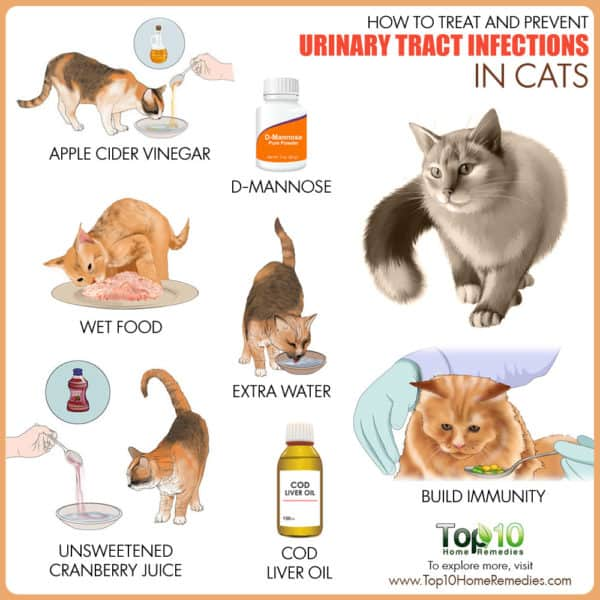 Treat and prevent urinary tract infection in cats