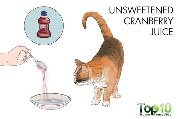 Unsweetened cranberry juice for urinary tract infection in cats