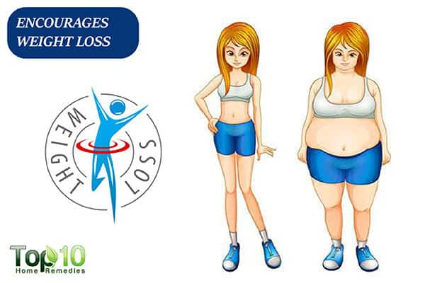 curry leaves promote weight loss