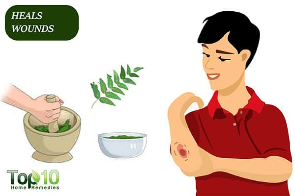 curry leaves help heal wounds