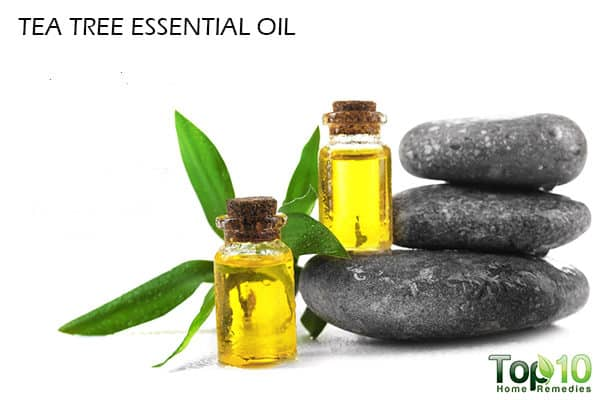 tea tree essential oil for hair loss