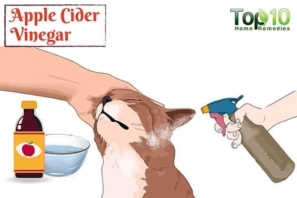 apple cider vinegar for dog allergies