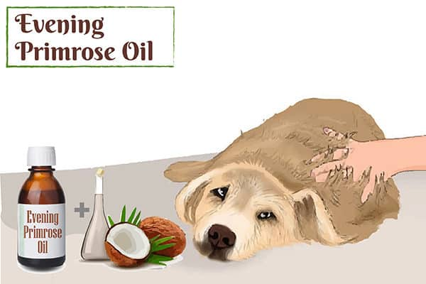Evening primrose oil for allergies in dogs