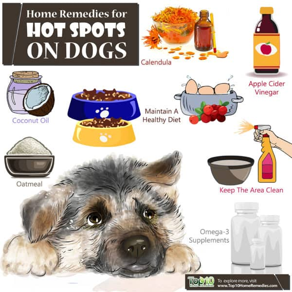home remedies for hot spots on dogs
