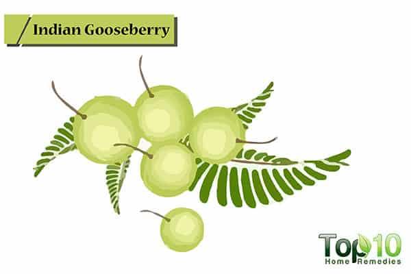 indian gooseberries for receding gums