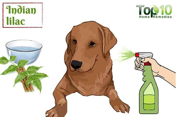 neem to treat dog allergies