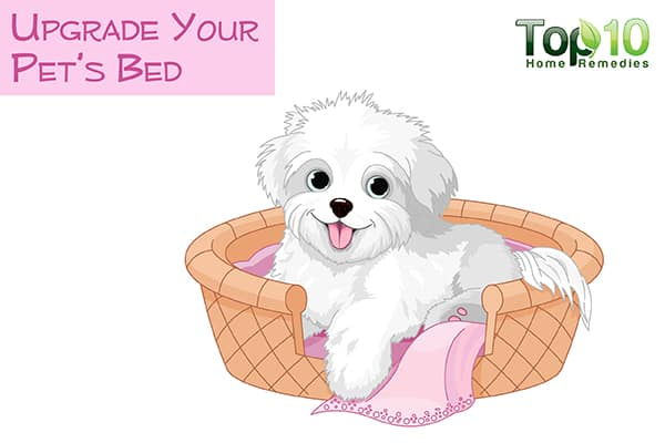 upgrade your aging dog's bed