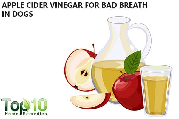 apple cider vinegar to fight bad breath in dogs
