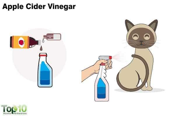 apple cider vinegar to treat fleas on cats