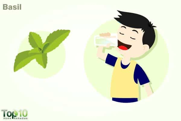 basil for fever in kids