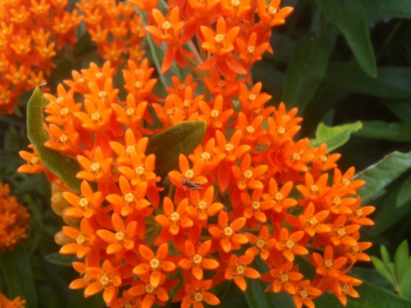 These Small Flowers Are Insanely Beautiful  50 PHOTOS  23  Small Orange Flowers