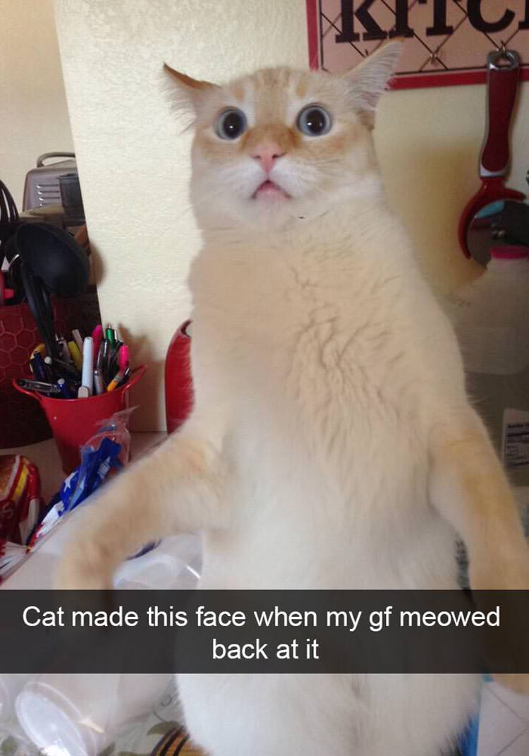 Animals Funny Things Cute Cats Saying