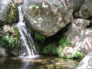 Solstice Pond