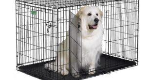 2. Midwest iCrate Folding Metal Dog Crate (Double Door)