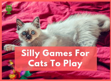 Silly Games For Cats To Play Feature Image (Canva)