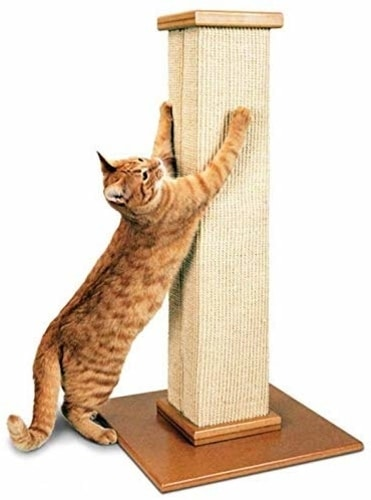 Best Cat Scratching Post - SmartCat Pioneer Pet Ultimate Scratching Post