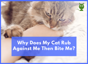 Why Does My Cat Rub Against Me Then Bite Me(post image)
