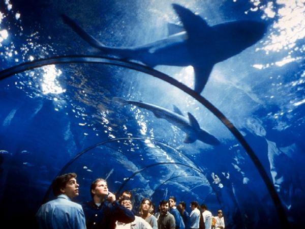 TUNNEL_Aquarium