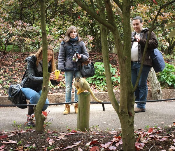 ZSL London Zoo Guide Vouchers Deals Top Dog Days