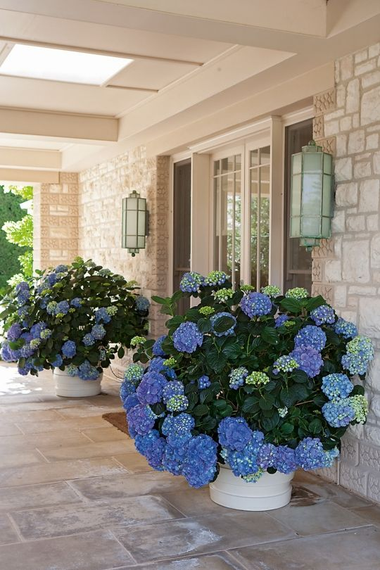 Large Porch Planters