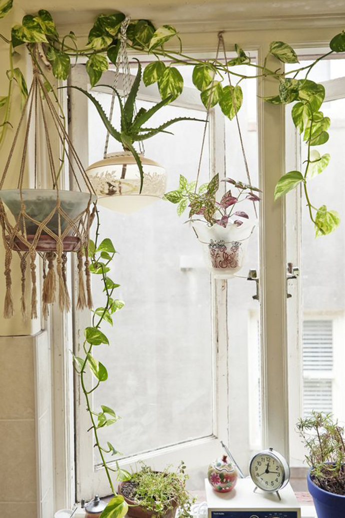 Indoor Climber Plants Are The Right Choice If You Want To ... on Hanging Plants Ideas  id=94435