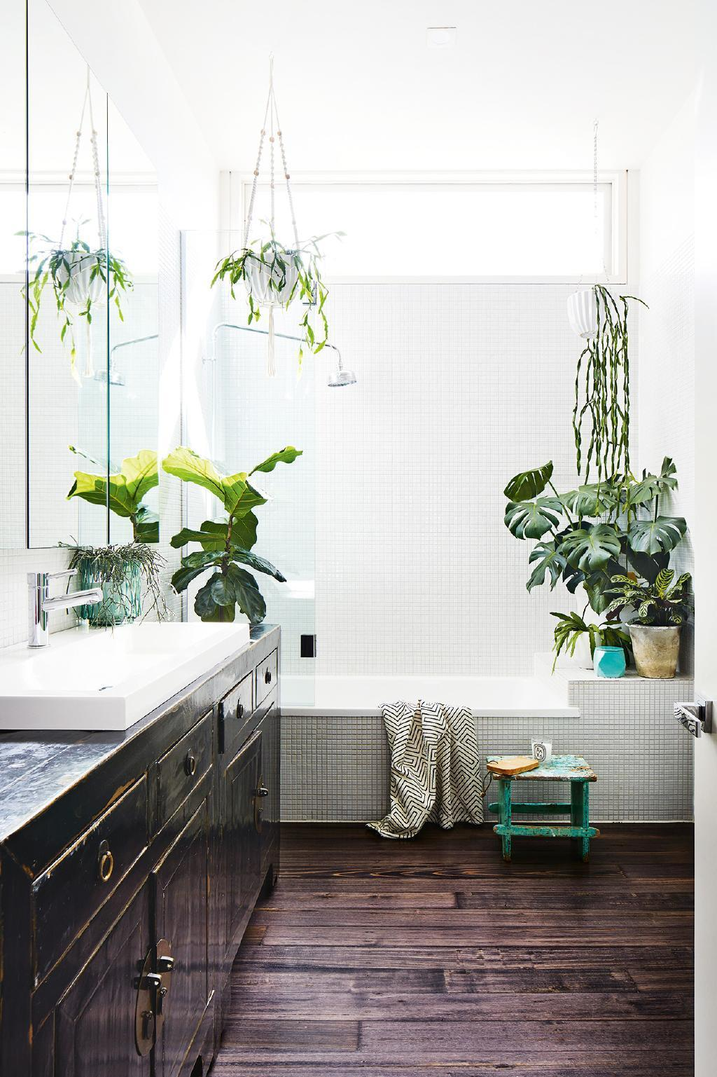 Bathroom Decor Plants