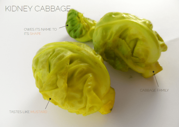 Kidneycabbage