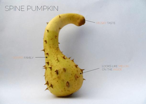 spinepumpkin