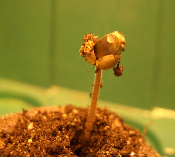 Из жизни ботаников, история 3 (17 фото) » Just one MIN