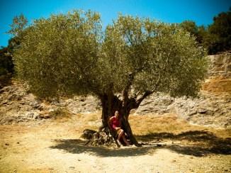 Au pied de mon arbre © Topich