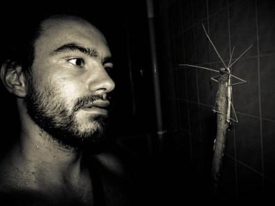 En vrac : papillons de nuit, crapauds, phasmes, chauves-souris, moustiques, araignées, serpents ... © Yopich