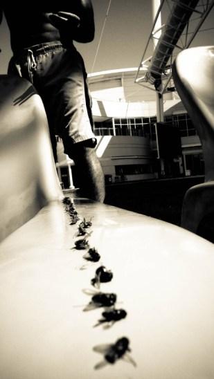 Petite explication : l'Australie est infestée de mouches, difficilement imaginable pour ceux qui n'ont pas foulé une fois dans leur vie le fameux bush... Ici, nous étions dérangés par des nuées de mouches récalcitrantes pendant notre séance bronzette... Qu'à cela ne tienne ! Nous avons débuté une extermination... © Yopich