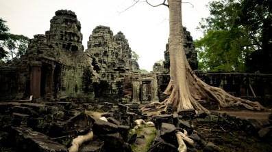 Les racines de Banteay Kdei