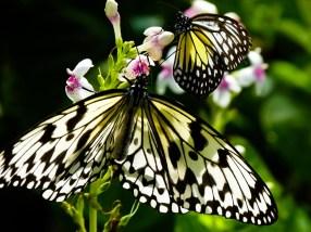 Mais 2 butterflies ! © Topich