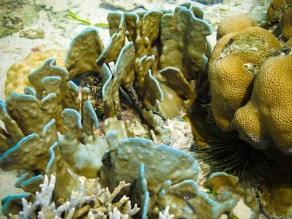 Coraux de Mantabuan © Sandy