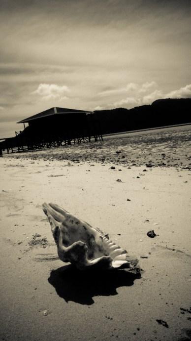 Oreille de mer © Topich