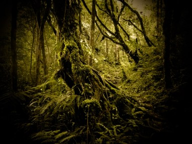 Mossy forest © Topich