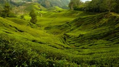 Ses paysages écossais et ses plantations de thé... © Topich