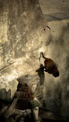 J'ai perdu mon poteau, on m'en offre une flopée en chair et en os ! © Topich